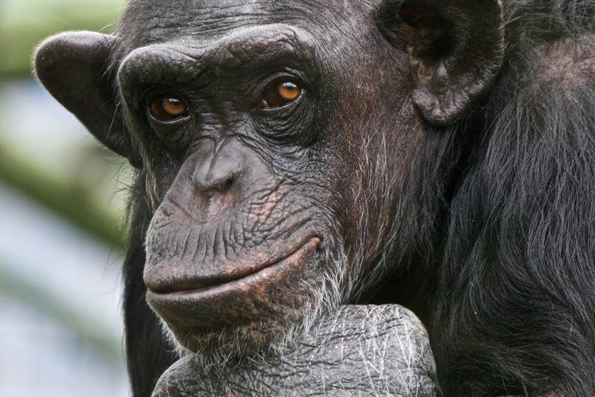 primate emotion and conflict Preface acknowledgements introduction 1 why natural conflict resolution filipo aureli and frans b m de waal part 1 - history introduction 2 the first kiss.