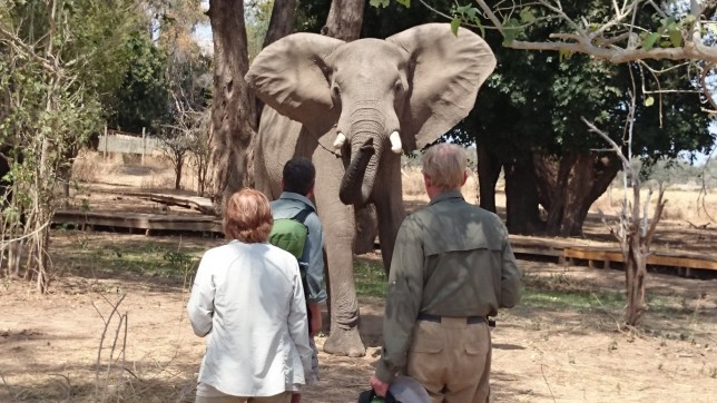 Close encounters with elephant:  A lesson in leadership